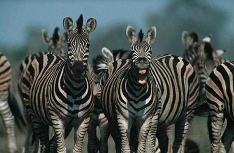 070315-hunting-africa_big