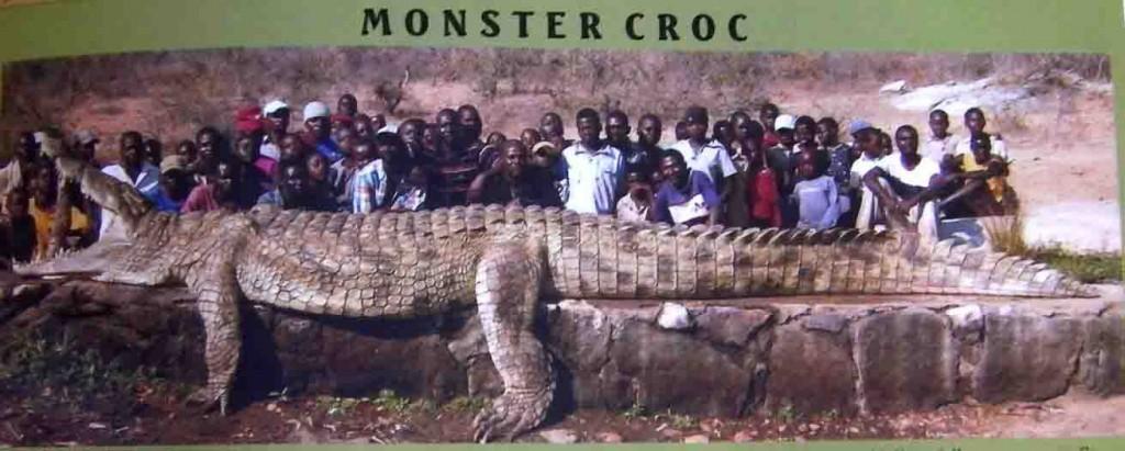 BigCroc(1)