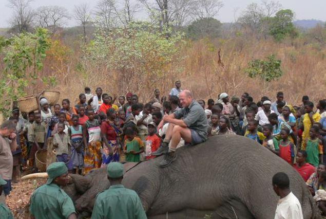 Community Elephant