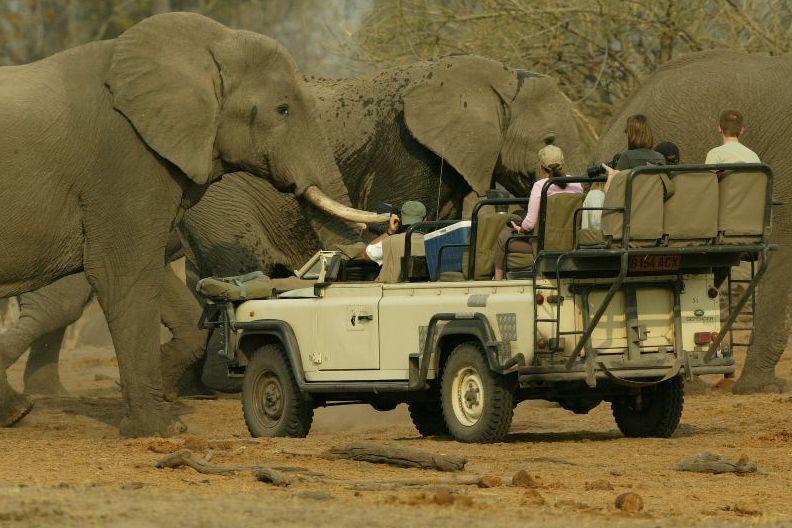 Elephant safari(2)