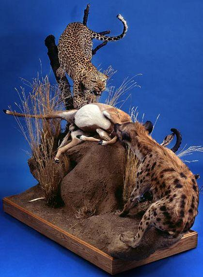 Frank Leopard Scene