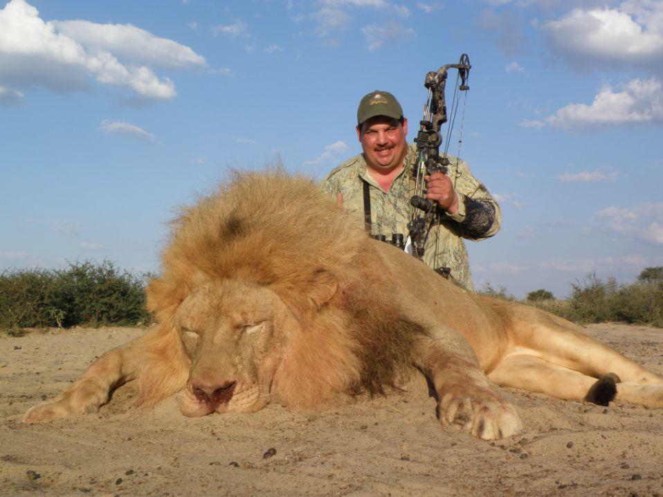 Vinny Beranco Lion(4)